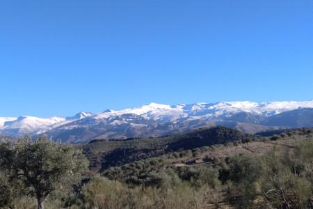 Organised trip to Sierra Nevada